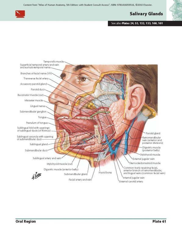 Atlas of Human Anatomy eBook: Frank H  Netter: books-for